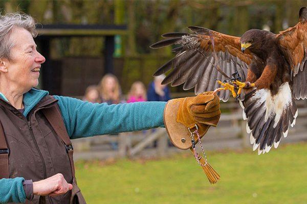Suffolk Owl Sanctuary Adopt An Owl Meerkat Encounter Sessions Ipswich