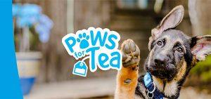 animal charity ipswich animal welfare rehoming animals