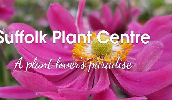 Plant centre Ipswich garden Centre Nursery